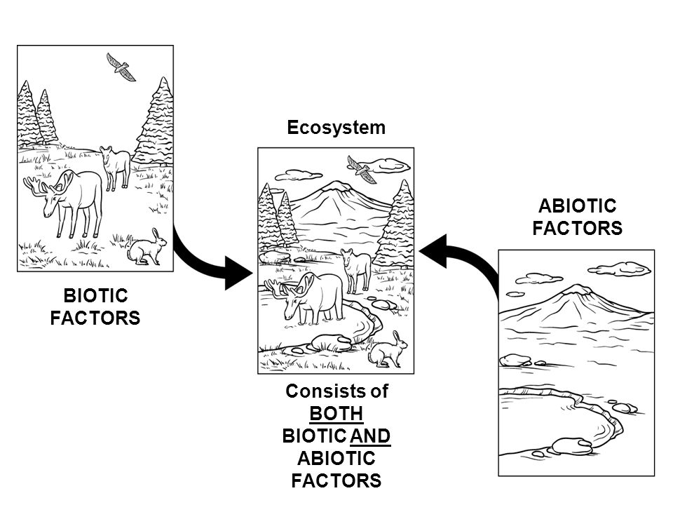 Ecology the study of the relationships between organisms