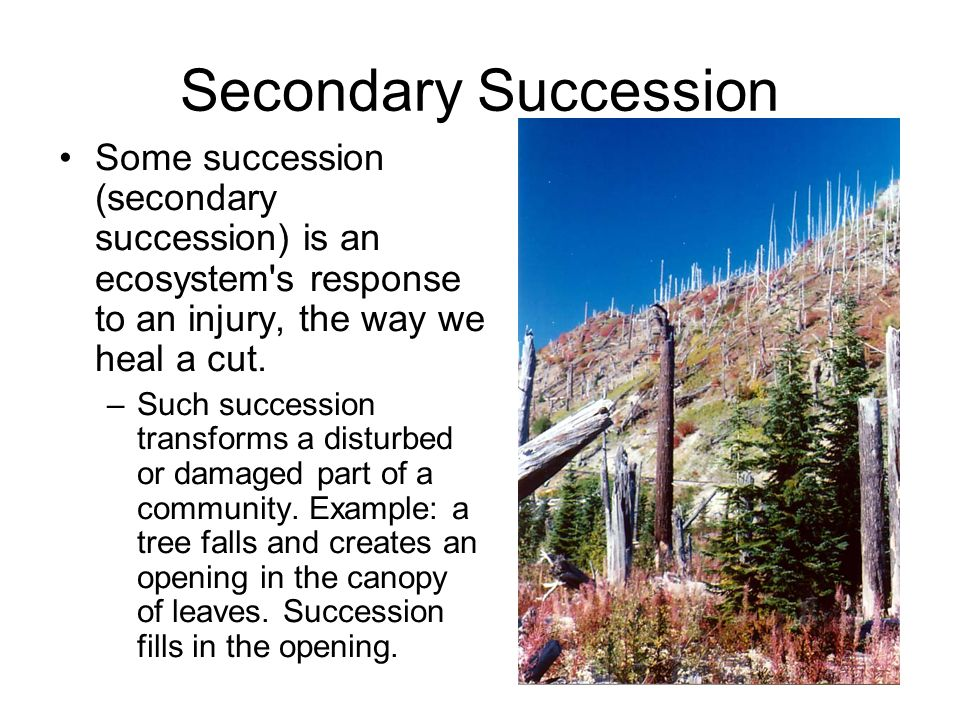 3 3 Succession How Ecosystems Change Over Time Ppt Download