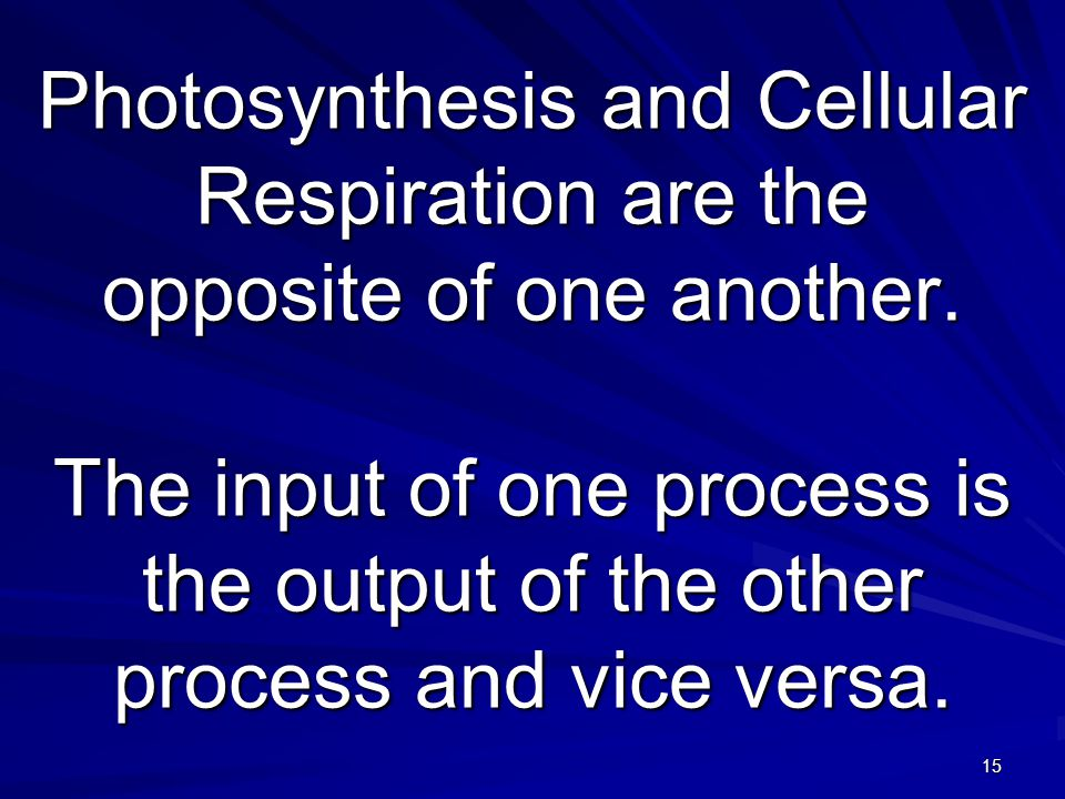 diagram with inputs and outputs of photosynthesis process australian wiring power circuit cellular respiration input output free the processes cell ppt video online download chart