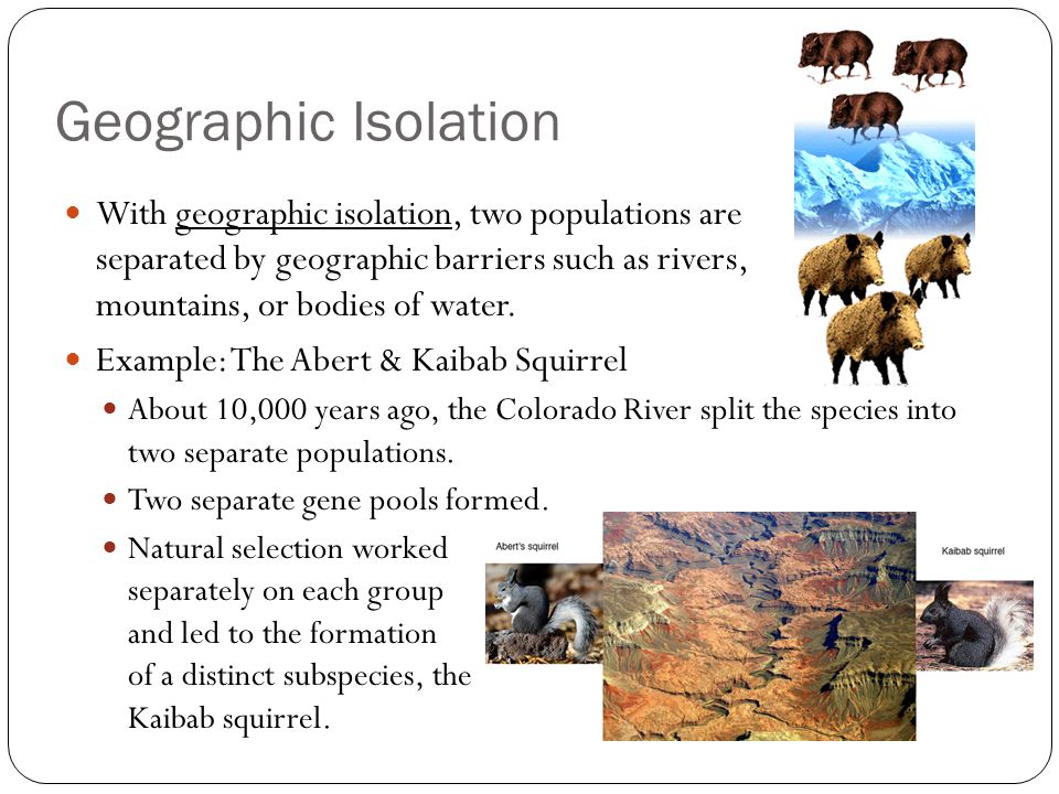 Evolution And Adaptation Notes Ppt Download
