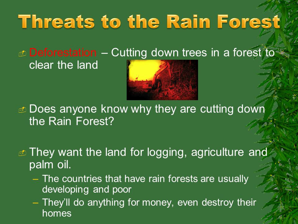 FOREST BIOMES  ppt video online download