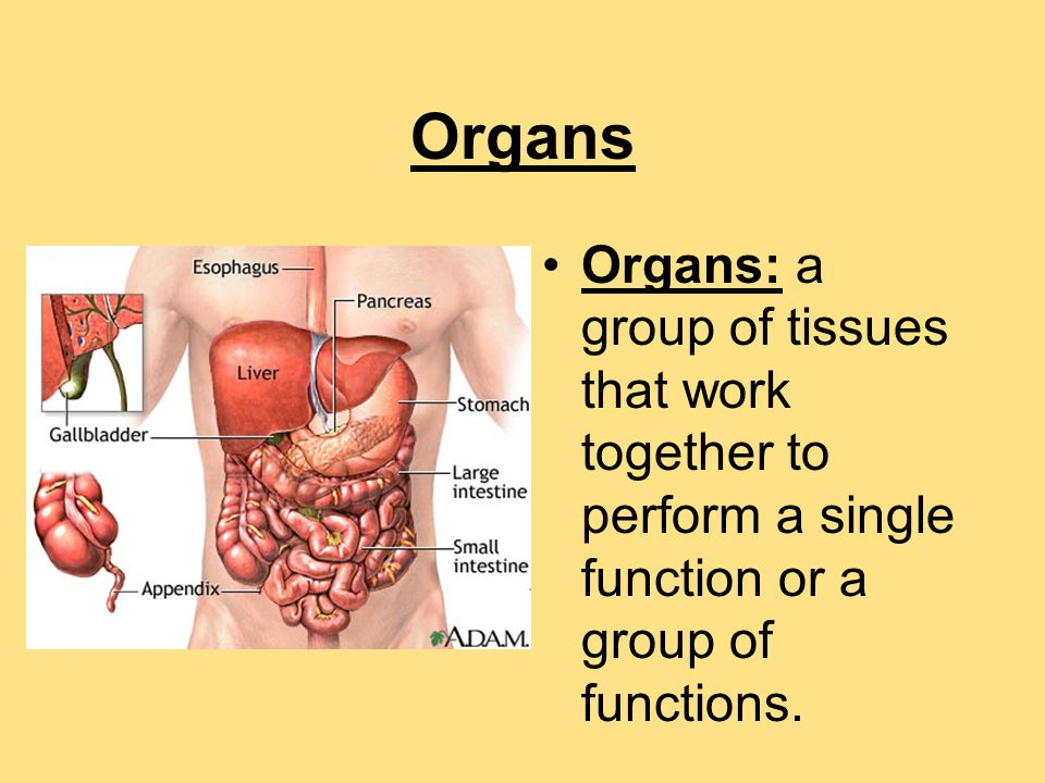 30 1 Organization Of The Human Body Ppt Download