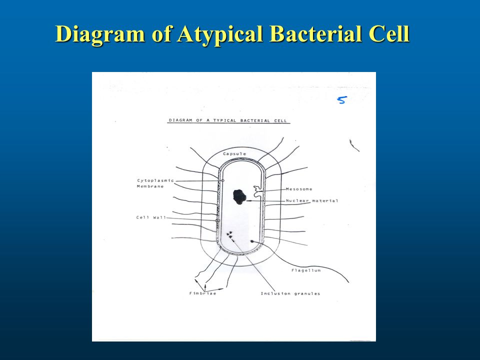 cell membrane diagram triumph spitfire wiring medical microbiology (biology of small organisms) - ppt video online download