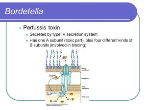 Bordetella, Francisella, and Brucella  ppt video online download