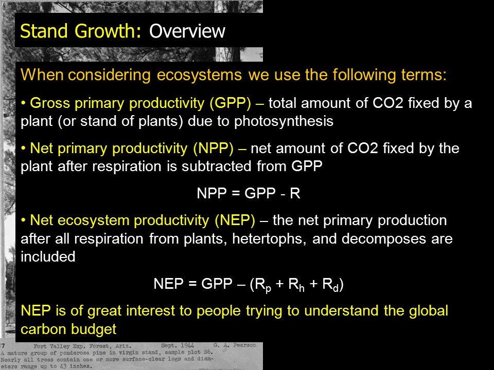 Plant Respiration Tables