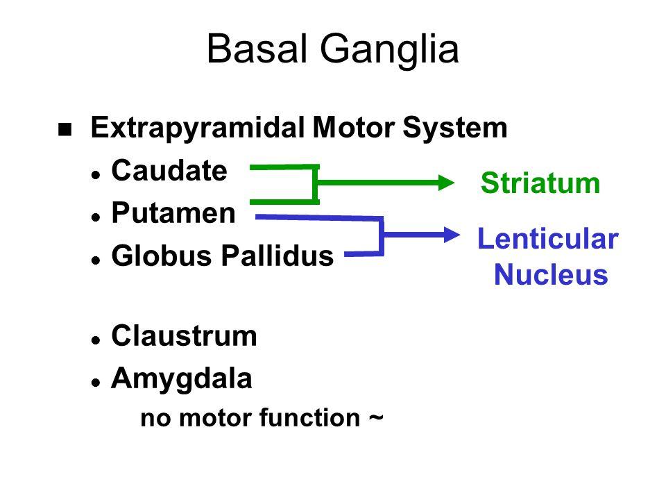 Extrapyramidal Motor System Definition Psychology