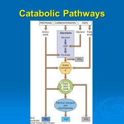 Diagram Of Learning Cycle Wiring Spotlights How Cells Make Atp: Energy-releasing Pathways - Ppt Video Online Download