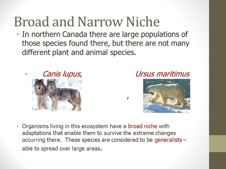 How Does Diversity Contribute To Species Survival? Ppt