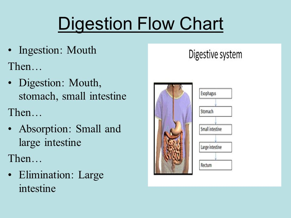 digestive system flow chart diagram star delta starter wiring 30.3 the functions of - ppt video online download