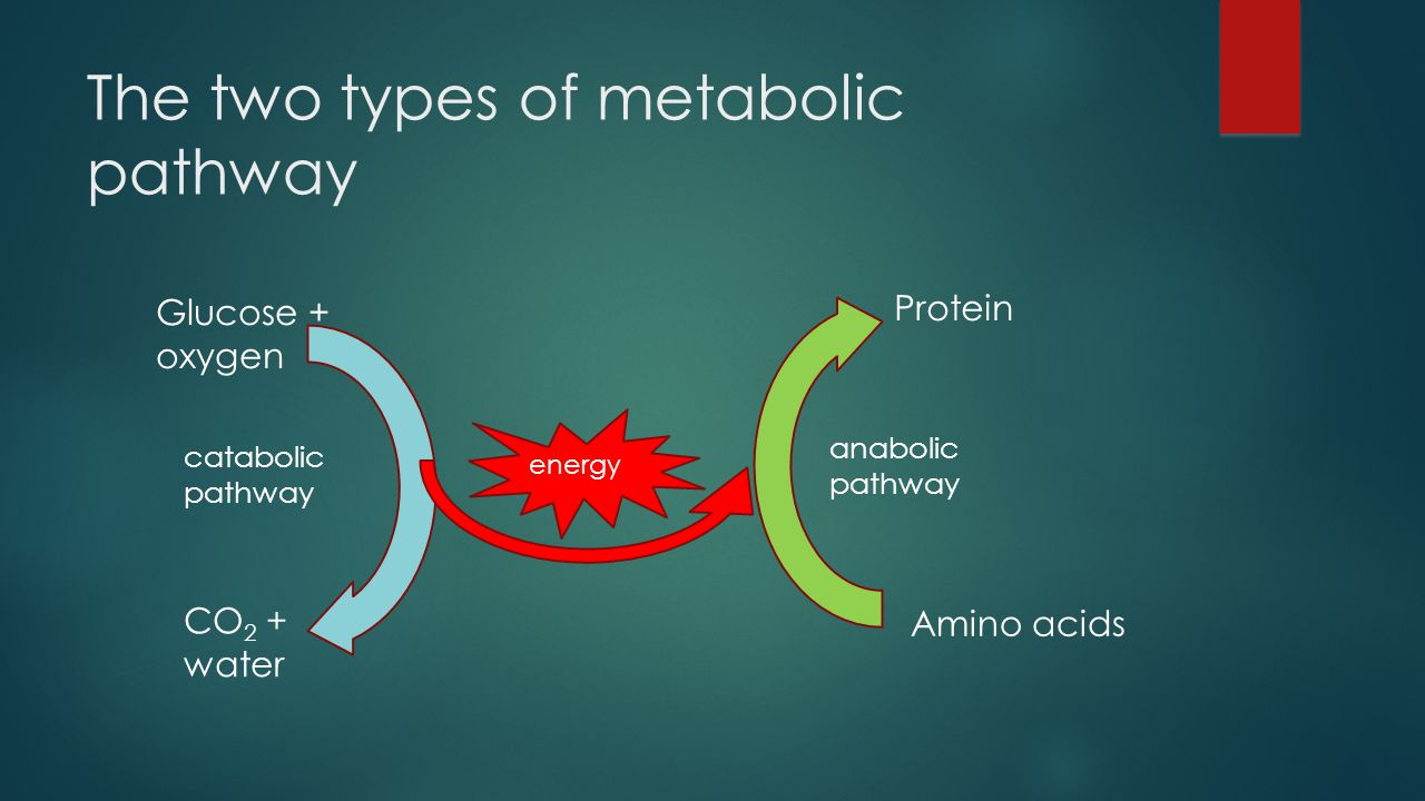 7 Metabolism And Enzymes Ppt Video Online Download