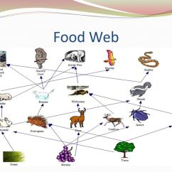 Taiga Food Web Diagram Evinrude Ficht Ignition Switch Wiring Presented By: Anish Agarwal - Ppt Video Online Download