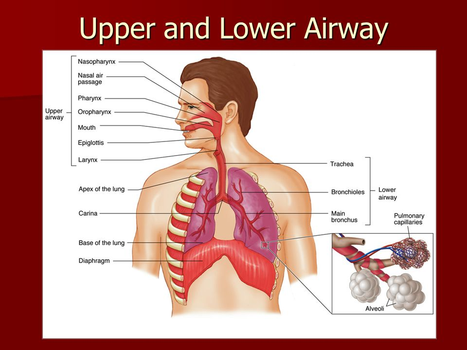 parts of the nose diagram 2008 saab 9 3 radio wiring dr. mahmoud abdel-khalek - ppt video online download