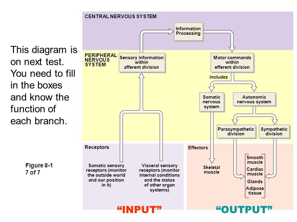 sympathetic and parasympathetic diagram house wiring circuit slides 1 to 145 copyright © 2007 pearson education, inc., publishing as benjamin cummings. - ppt ...
