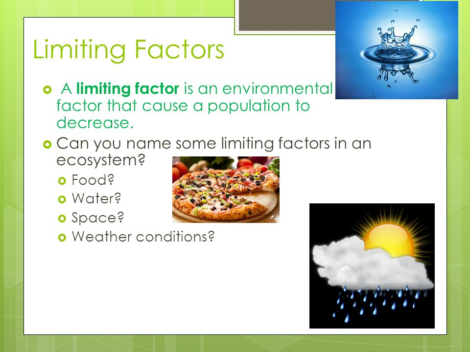 Ecosystems What Is Ecology? Ppt Video Online Download