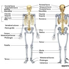 Scapula Diagram Quiz 3 Phase Roller Door Wiring Information 6 Quizzes During The Quarter - Ppt Video Online Download