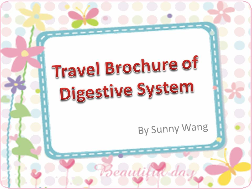 Travel Brochure Of Digestive System Ppt Video Online Download