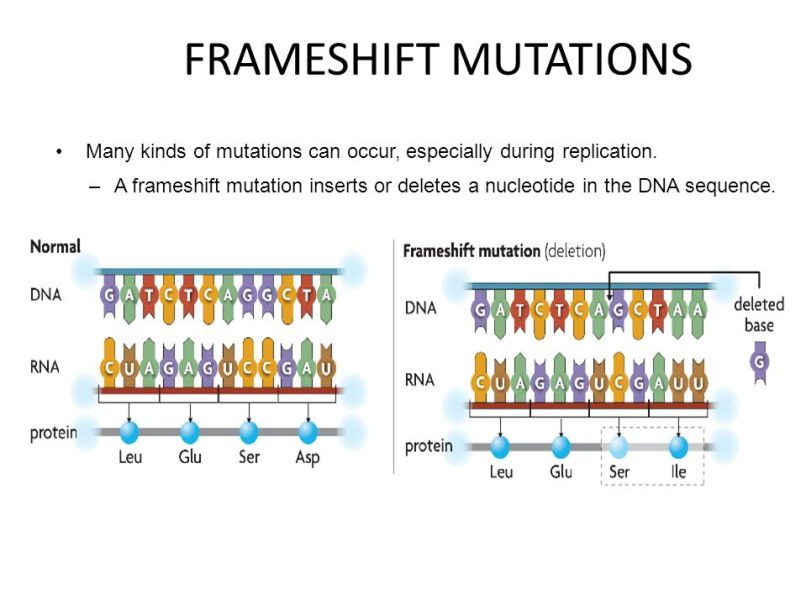 Frameshift Mutation Example Gallery - example cover letter for resume