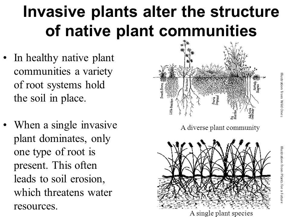 Glacier National Park's Invasive Plant Citizen Science