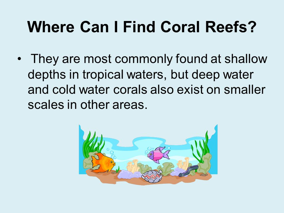 Coral Reefs By Seeley Phillips  ppt download