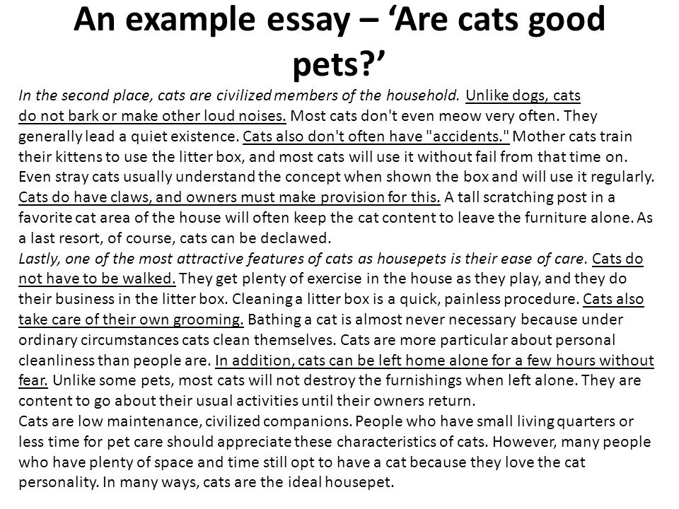 Research Paper About Cats Essay Academic Writing Service