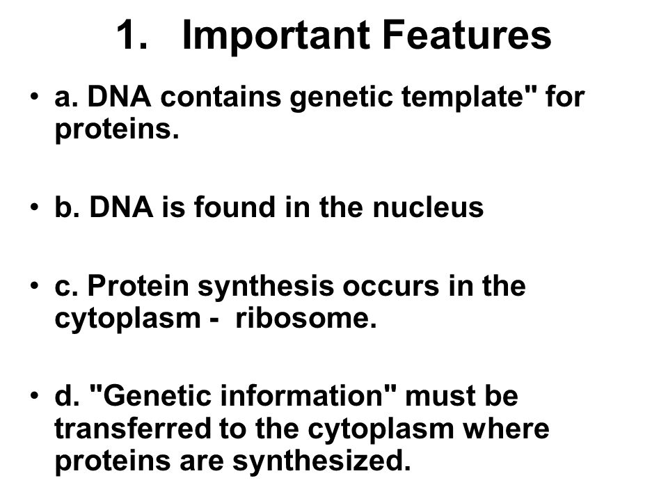 1. Important Features a. DNA contains genetic template