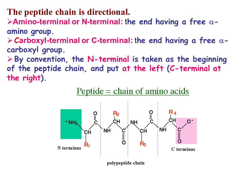 Lecture 1 Amino acids  ppt video online download
