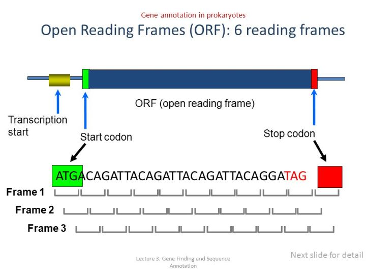 Fine What Are Open Reading Frames Images - Custom Picture Frame ...