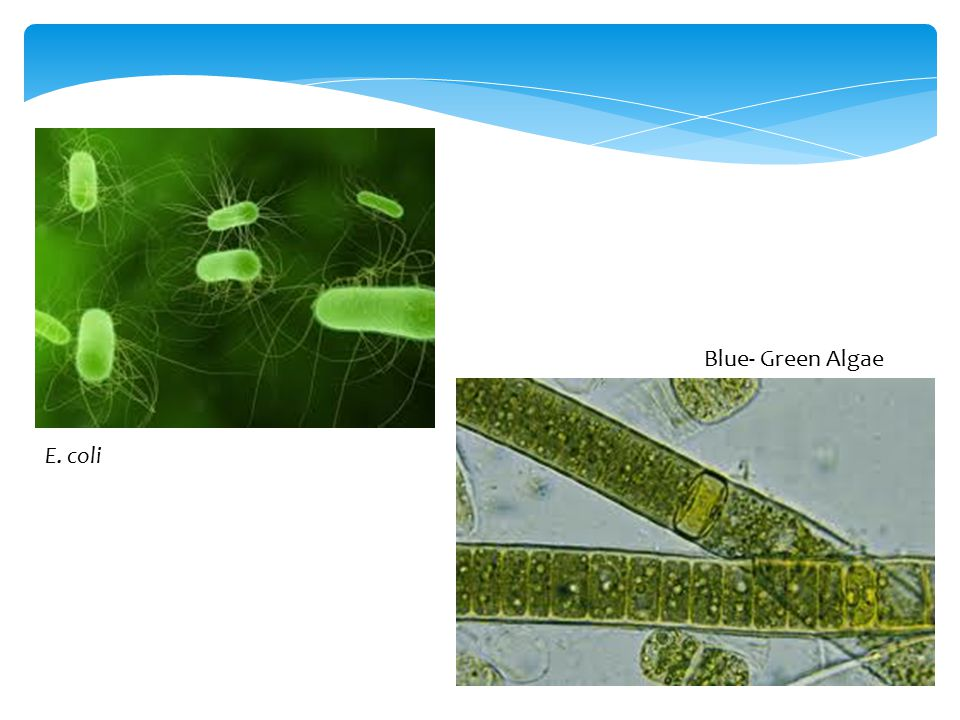 Algae Green Blue Structure Cell