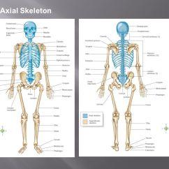 Human Hand Skeleton Diagram 2002 Gmc Sierra 2500hd Radio Wiring Orthopedic Surgery The Branch Of Medical Science Concerned With Disorders Or Deformities ...