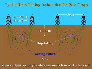 Subsurface Drip Irrigation (SDI)  ppt video online download