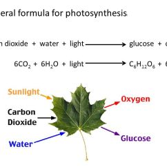 Photosynthesis And Cellular Respiration Cycle Diagram System Sensor Smoke Detector Wiring Cell Energy (photosynthesis Respiration) Notes - Ppt Video Online Download