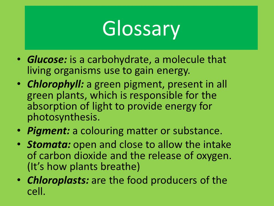 law of conservation mass diagram 5 pin socket wiring plants people and animals need oxygen to live. green make the in air we ...