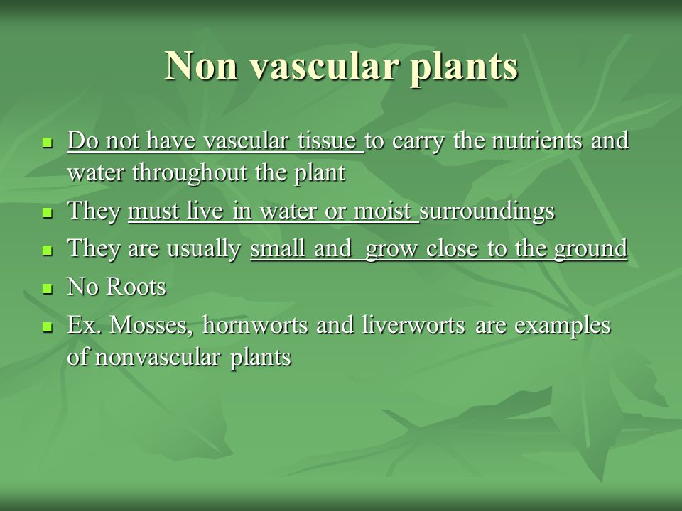 non vascular plant diagram trailer wiring 7 way chevrolet plants characteristics - ppt video online download