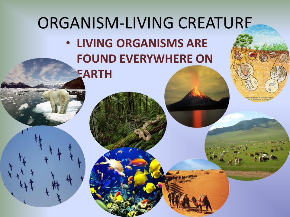 Image result for living organisms images