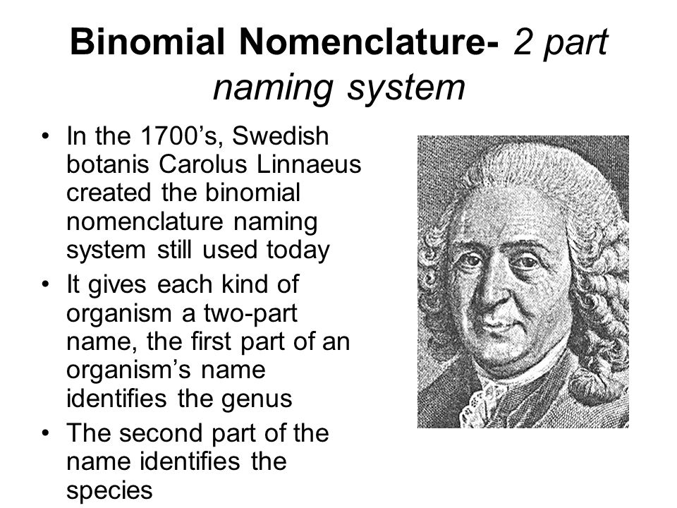 Chapter 18 Taxonomy- branch of biology that groups & names