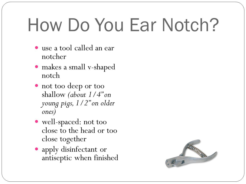 Ear notch diagram online schematic diagram ear notching worksheet image collections kindergarten preschool rh adelefisher net ear notching system ear notching system ccuart Image collections