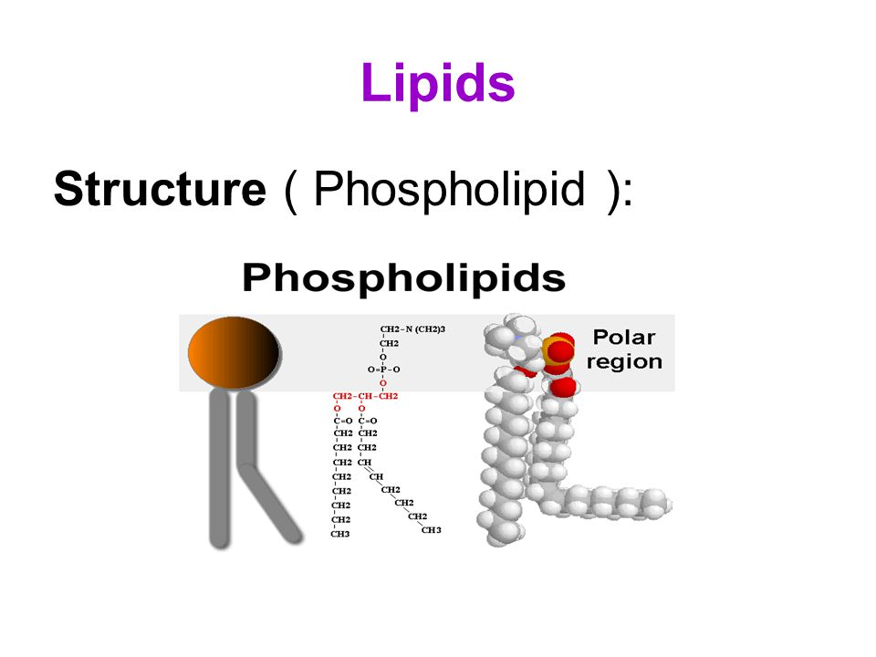 Macromolecules ( Carbohydrates, Lipids, Proteins and