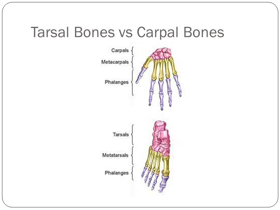 Diagram Of The Carpals Of Wrist