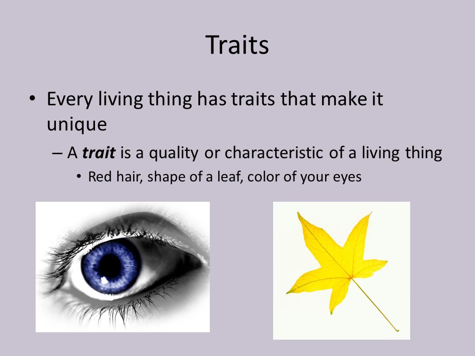 Inherited Traits and Learned Behaviors  ppt video online