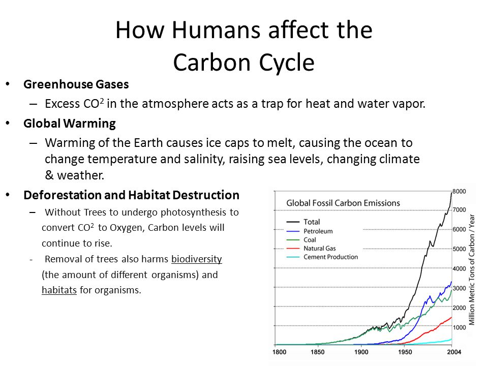 Ecology Energy Flow And Nutrient Cycles Ppt Video