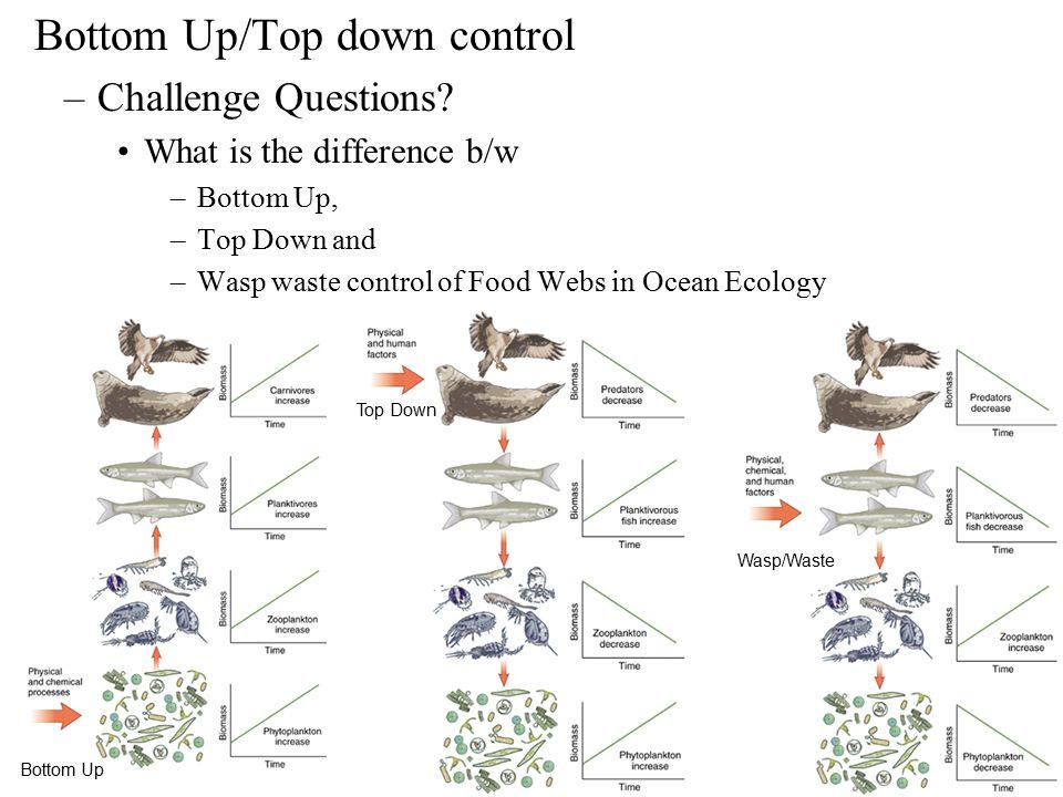 OCEAN FOOD WEBS Ppt Download