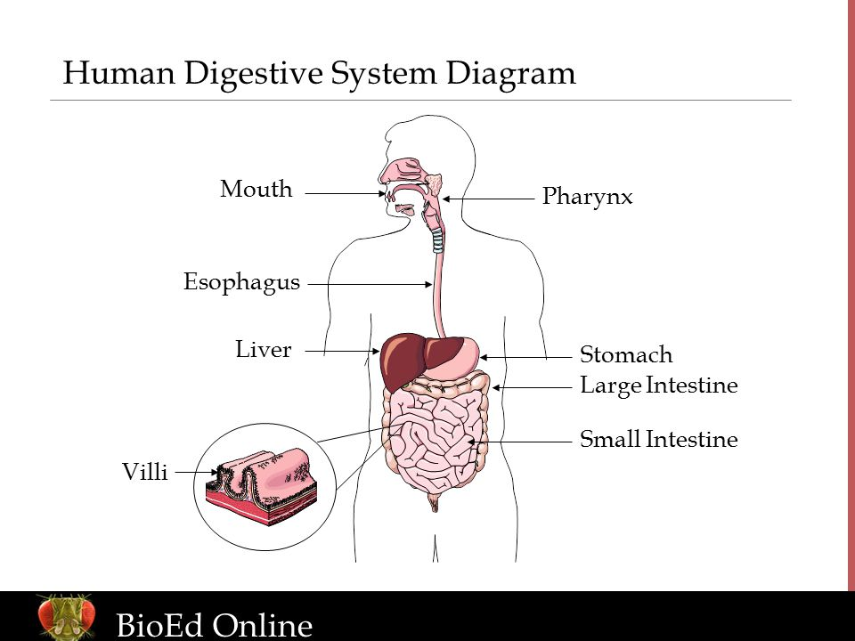 skin system diagram sales process flow examples the human organism introduction to body systems - ppt download