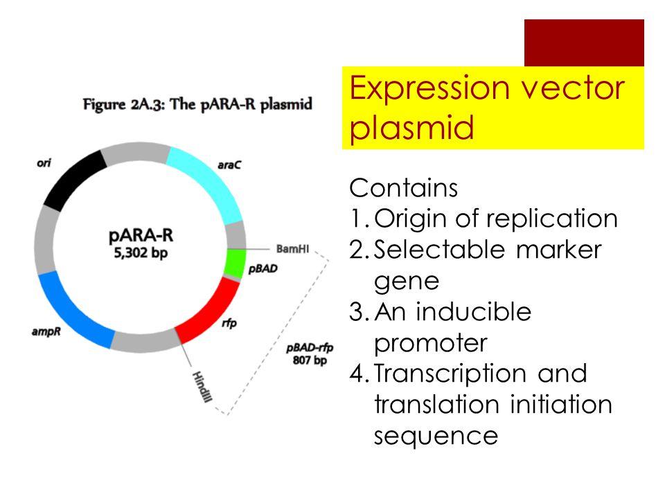 plasmid as a cloning vector