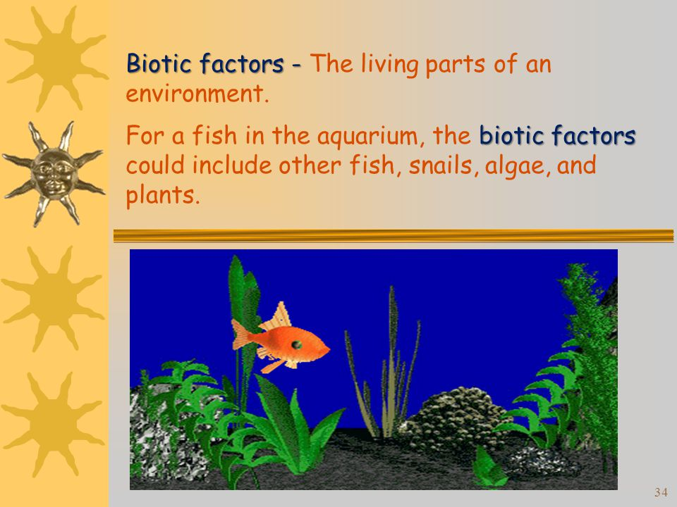 Reference Modern Biology Chapter Ppt Video Online Download