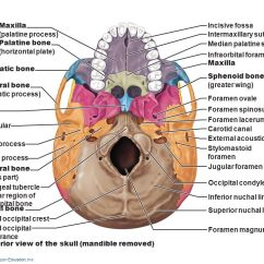 Bones Of The Skull Anterior View Diagram Amp And Sub Wiring 7 Skeleton: Part A. - Ppt Video Online Download