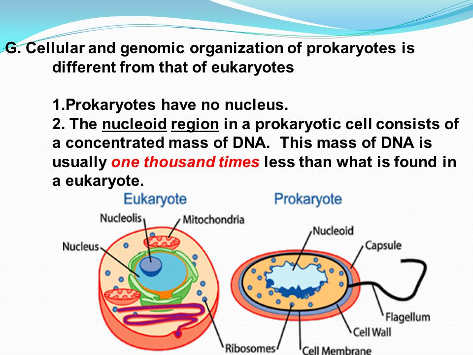 gram positive cell wall diagram human brain prokaryotes vs. eukaryotes - ppt video online download