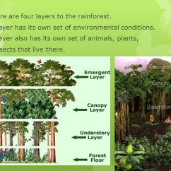 Tropical Rainforest Diagram Strat Wiring Series Parallel Out Of Phase Layers The - Ppt Video Online Download