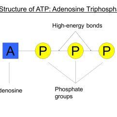Diagram Of The Atp Molecule Level Zero Data Flow Glucose Metabolism And Diabetes Ppt Download