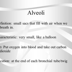 Lung Alveoli Diagram Cigarette Lighter Plug Wiring Warm Up Respiratory System Reading And Questions. - Ppt Video Online Download