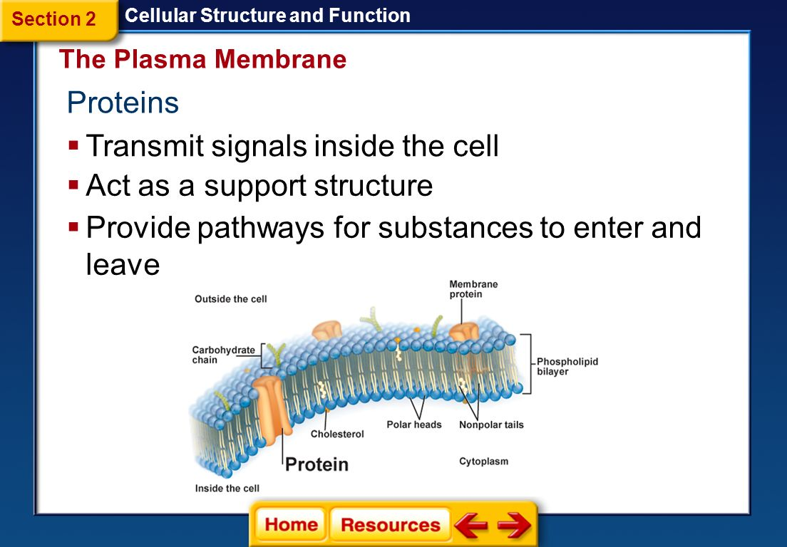 diagram of a section cell membrane central heating s plan wiring 1 cellular structure and function discovery